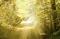 Sunshine on a path