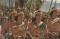 Two Thousand Stripling Warriors