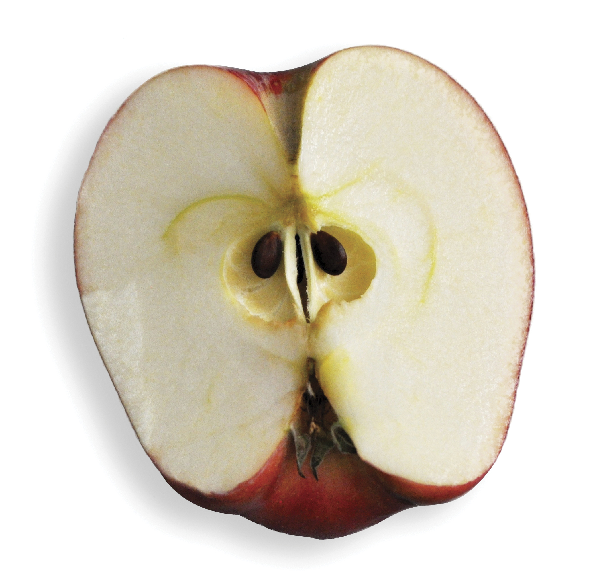 A portion of a sliced apple with two seeds showing.